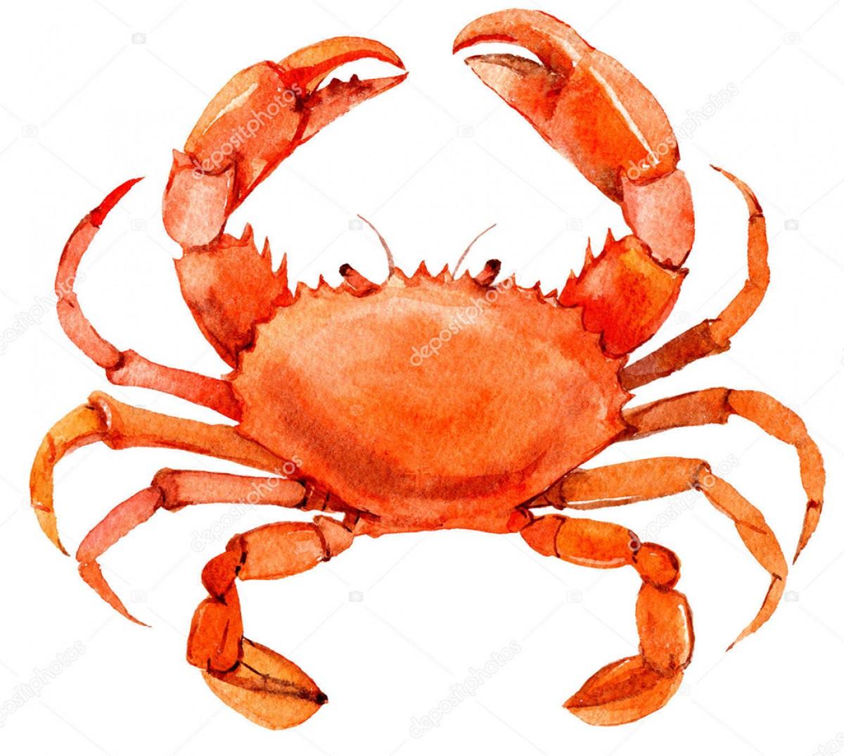 Category Crab 螃蟹